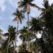 Palm treesjpg